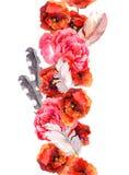 Kwiecista bezszwowa akwareli ramy granica z czerwienią i menchiami kwitnie (maczek, wzrastał) Aquarel Zdjęcie Stock