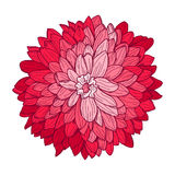 Kwiecista dekoracja Obraz Royalty Free