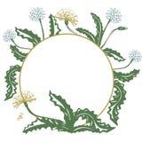 Kwiecista dekoracyjna karta z dandelion i miejscem dla twój teksta, wektorowy wizerunek royalty ilustracja