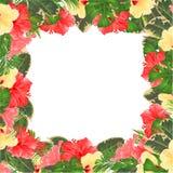 Kwiecista granica z kwitnąć różnorodnego poślubnika i tropikalnych liści kwiatu wektorowego Ilustracyjnego tło z miejscem dla twó Zdjęcie Royalty Free