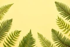 Kwiecista lato moda Paprociowy Tropikalny liść minimalizm Obrazy Stock