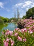 Kwiecista parkowa scena w Marbella, Hiszpania Obrazy Stock