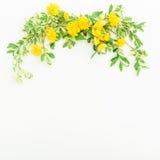 Kwiecista rama robić gałąź z liśćmi i kolorów żółtych kwiatami na białym tle Mieszkanie nieatutowy, odgórny widok Kwiaty i liście Zdjęcie Royalty Free