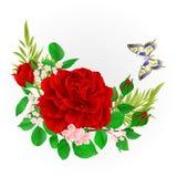 Kwiecista rama z czerwień motyla i róży rocznikiem ilustracja wektor