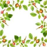 Kwiecista rama z liśćmi i jagodami ilustracja wektor