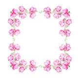 Kwiecista rama z różowymi kwiatów pączkami, gałąź i liśćmi na pięcie roślinie na białym tle, odgórny widok Zdjęcie Royalty Free