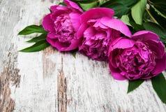 Kwiecista rama z różowymi peoniami Fotografia Royalty Free