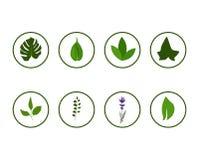 Kwieciste greenery ikony w okręgu Zdjęcia Royalty Free