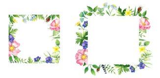Kwieciste kwadrat ramy z różą, dzikimi kwiatami i zieleni życiami, obraz stock