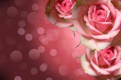 kwieciste projekt róże Zdjęcia Royalty Free