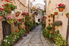 Kwieciste ulicy Spello w Umbria, Włochy Zdjęcie Stock