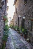 Kwieciste ulicy Spello w Umbria, Włochy Fotografia Royalty Free