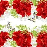 Kwiecistego horyzontalnego rabatowego bezszwowego tła czerwony poślubnik kwitnie z jaśminowego i motyliego rocznika wektorową ilu royalty ilustracja