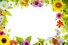 kwiecistej kwiatów ramy odosobniony storczykowy pinky Zdjęcie Royalty Free
