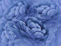 Kwiecisty Błękitny tło bukietów błękitny kwiaty Zakończenie kwiecisty kolaż tła składu powoju kwiatu tulipany biały Zdjęcia Royalty Free