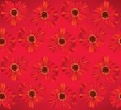 Kwiecisty bezszwowy tło. Kwiat stokrotki wzór. Zdjęcia Royalty Free