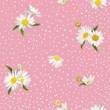 Kwiecisty Bezszwowy wzór z okwitnięcie stokrotki kwiatami Tkaniny natury wiosny tło z Chamomile dla tkaniny, Tapetowy opakowanie ilustracja wektor