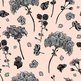 Kwiecisty bezszwowy wzór z kwitnącymi bodziszkami Zdjęcie Stock