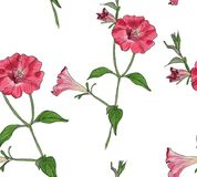 Kwiecisty bezszwowy wzór z petuniami royalty ilustracja