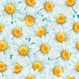 Kwiecisty bezszwowy wzór z stokrotkami Zdjęcia Royalty Free