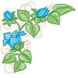 Kwiecisty dekoracja element Fotografia Stock