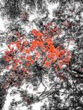 Kwiecisty drzewo Obraz Royalty Free
