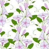 Kwiecisty elegancki tło powój bezszwowy oferta wzoru kwiatu bindweed Chwała niekończący się kobiecy ornament ilustracja wektor