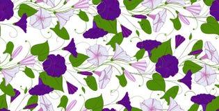 Kwiecisty elegancki tło powój bezszwowy oferta wzoru kwiatu bindweed Chwała niekończący się kobiecy ornament royalty ilustracja