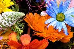 Kwiecisty gerberas wzór Zdjęcie Stock