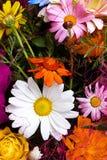 Kwiecisty gerberas wzór Zdjęcia Stock