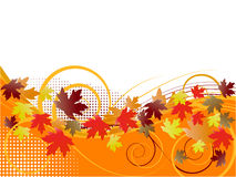 kwiecisty jesień tło Obrazy Royalty Free