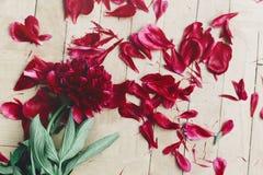 Kwiecisty kartka z pozdrowieniami pojęcie, skacze eleganckiego wizerunku odgórny widok bea Fotografia Stock