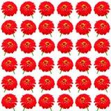 Kwiecisty kolorowy deseniowy tło set Zdjęcie Royalty Free