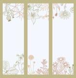 Kwiecisty, kwiecenie dekoracyjny sztandar, ulotki kolekcja Obrazy Royalty Free