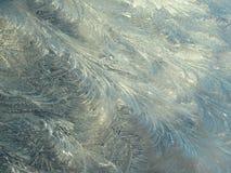 Kwiecisty mrozu wzór w Wczesnym światła słonecznego tle Zdjęcia Stock