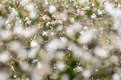 Kwiecisty naturalny tło w miękkiej ostrości zdjęcie royalty free