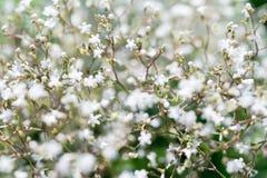 Kwiecisty naturalny tło w miękkiej ostrości zdjęcia stock