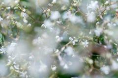 Kwiecisty naturalny tło w miękkiej ostrości fotografia stock