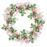 Kwiecisty okręgu tło Round jesieni róż dzicy kwiaty ilustracyjni ilustracji
