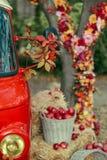 Kwiecisty przygotowania na drzewie Zdjęcia Royalty Free