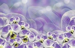 Kwiecisty purpury tło bukieta składu ilustracyjny orchidei lato wektor Kwitnie phalaenopsis na białym tła bokeh 2007 pozdrowienia Fotografia Royalty Free
