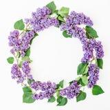 Kwiecisty ramowy skład z bzów kwiatami rozgałęzia się na białym tle Mieszkanie nieatutowy, odgórny widok bukietów formie ciągnąć  Zdjęcia Royalty Free