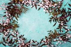 Kwiecisty ramowy skład z wiele kwiatami łyszczec Obrazy Royalty Free