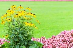 Kwiecisty ramowy tło z koloru żółtego i menchii ogródem kwitnie Zdjęcia Stock