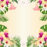 Kwiecisty ramowy tło z ropical kwiatów kwiecistym przygotowania z piękną żółtą storczykową palmą, filodendronem i Brugmansia, ilustracja wektor