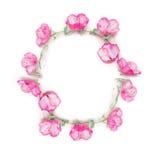 Kwiecisty ramowy wianek z różowymi kwiatów pączkami, gałąź i liśćmi na pięcie roślinie na białym tle, Zdjęcie Stock