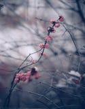 Kwiecisty sezon jesienny tło Fotografia Royalty Free