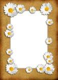 kwiecisty szablon Obraz Royalty Free