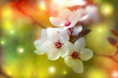 Kwiecisty tło - czereśniowy okwitnięcie magiczny, kolorowy, fantazja Obrazy Stock