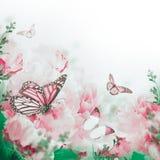 Kwiecisty tło róże Obraz Royalty Free